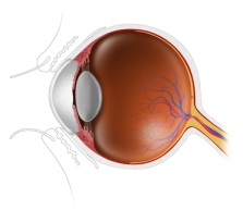 eye-anatomy-paid-depositphotos_22304043_xs